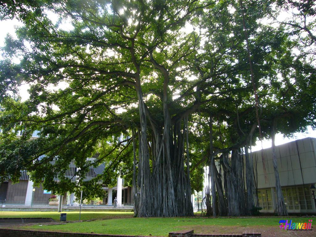 ハワイの壁紙 風景 を更新 毎日がアロハフライデー