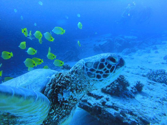 ウミガメの画像 p1_37